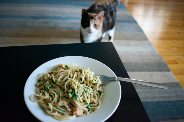 linguine with clams with cat